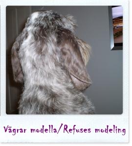 vägrar modella